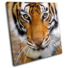 Tiger Face Animals - 13-1338(00B)-SG11-LO
